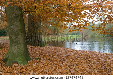colorful foliage in an autumn park