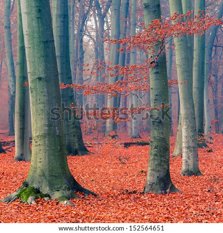 Colorful foliage in the autumn forest - stock photo
