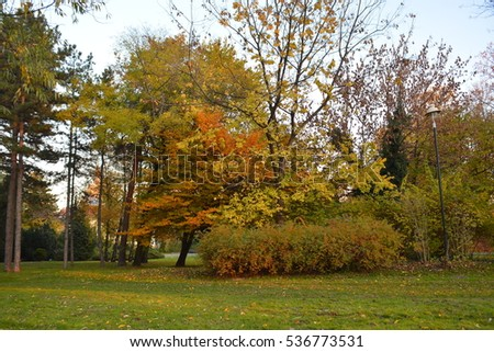 Colorful foliage in the autumn park. With conifer trees, green grass and eneving sun. Novi Sad. Serbia.