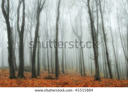 colorful forest in autumn - stock photo