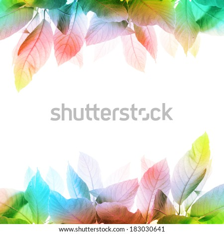 Colorful fresh leaves isolated on white background - stock photo