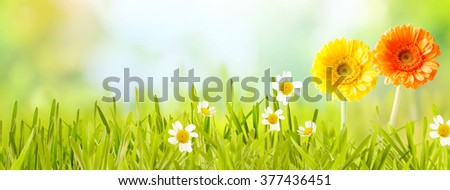 Colorful fresh panoramic spring banner with orange and yellow flowers and white daises in new green grass in a garden or meadow with copy space over a blurred nature background - stock photo