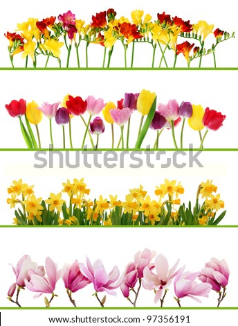 Colorful fresh spring flowers borders on white background. Tulips, daffodils, freesia, magnolia. - stock photo