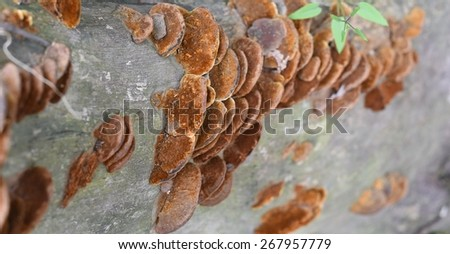 Colorful fungus formation on tree trunk - stock photo