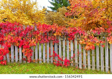 Colorful garden - stock photo