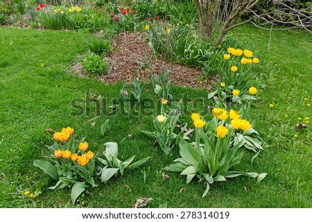 Colorful garden flowers in spring - stock photo
