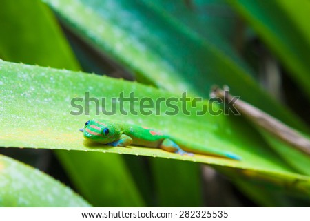 Colorful gecko hiding in the plant - stock photo