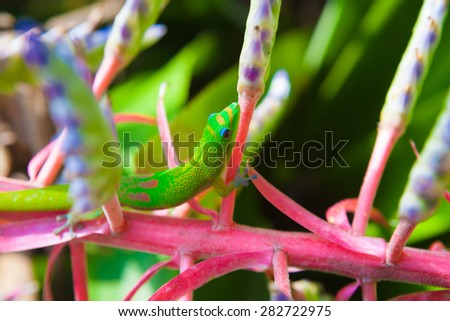 Colorful  gecko hiding in the plants - stock photo