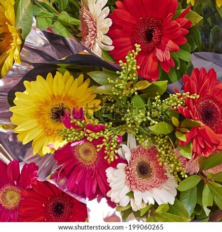 colorful Gerber daisies bouquet closeup      - stock photo