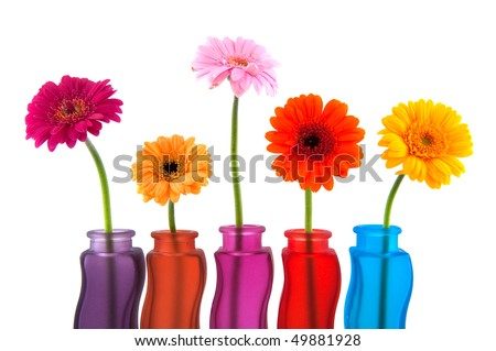 Colorful Gerber flowers in glass modern vases
