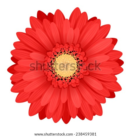 Colorful gerbera flower head - red and yellow colors. - stock photo