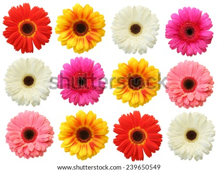 Colorful gerbera on white background isolated - stock photo