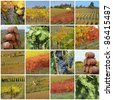colorful grape harvest time collage, Tuscany, Italy, Europe - stock photo