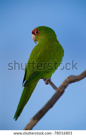 Colorful Green Parrot Isolated Over Blue Sky - stock photo