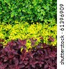 Colorful hedge - stock photo