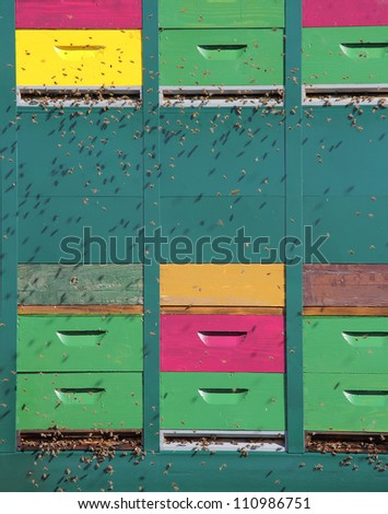 Colorful hive of bees in a meadow near the forest - stock photo