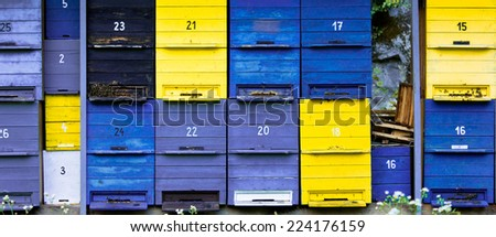 colorful hives in black, yellow, violet and blue, cropped