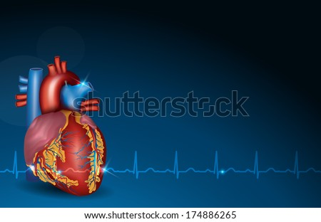 Colorful human heart and normal sinus rhythm on a beautiful blue background.
