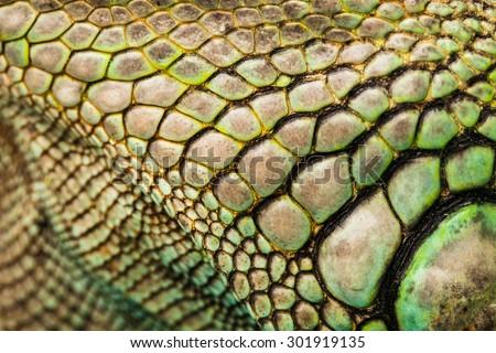 colorful iguana reptile skin, close up - stock photo