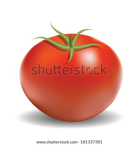 colorful illustration with red tomato for your design - stock photo