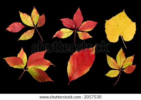 Colorful image of autumn leaves - stock photo
