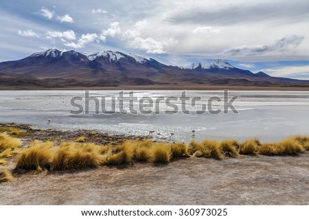 Colorful lagoon with flamingos in the High Andean Plateau desert in Bolivia