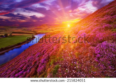 Colorful landscape scenery with a footpath through the hill slope covered by violet heather flowers and green valley, river, mountains and cloudy blue sky on background. Pentland hills, Scotland