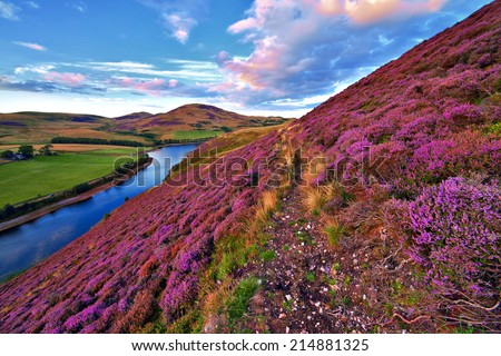 Colorful landscape with a footpath through the hill slope covered by violet heather flowers and green valley, river, mountains and cloudy blue sky on background. Pentland hills,  Edinburgh, Scotland