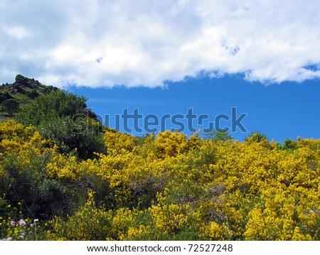 Colorful landscape with broom flowers and blue sky with cloud, Vermilion coast, Pyrenees Orientales, Roussillon, France - stock photo
