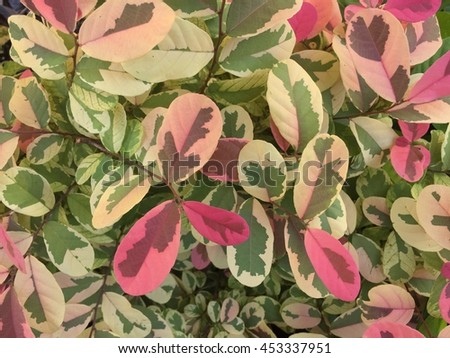 Colorful leaf background