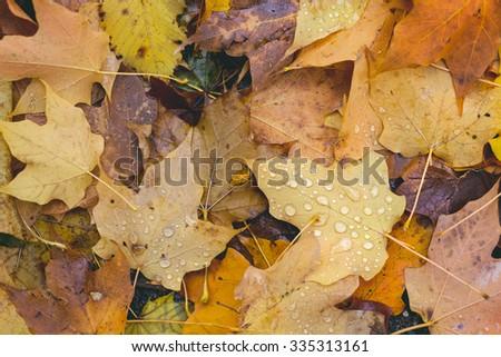 Colorful leaf foliage - stock photo