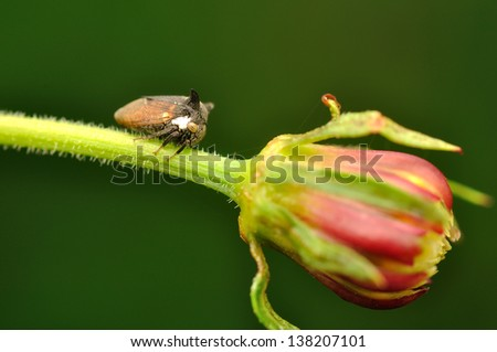 colorful leaf hopper by - photo #22