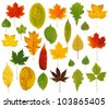 Colorful leaves - stock photo