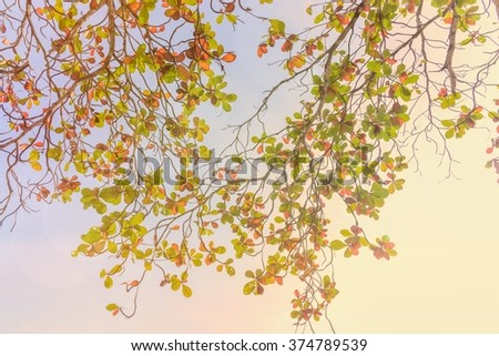 Colorful leaves and branches Tropical almond and sunshine Background
