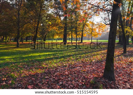 Colorful leaves and trees in a park at autumn at sunset