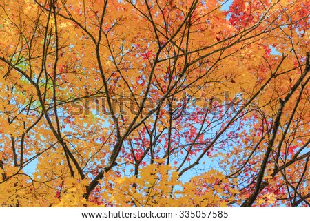 colorful  leaves branch tree nature background