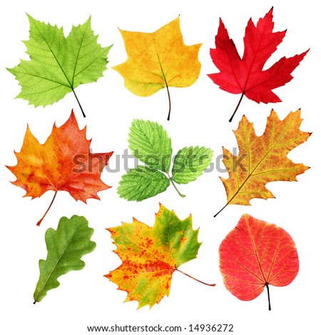 Colorful leaves collection - stock photo
