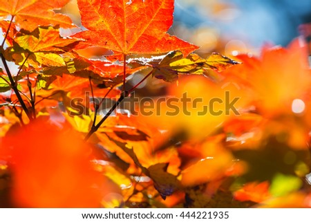 Colorful leaves in Autumn season