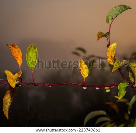 Colorful leaves on a branch at the beginning of autumn. Illuminated morning haze in the background. - stock photo