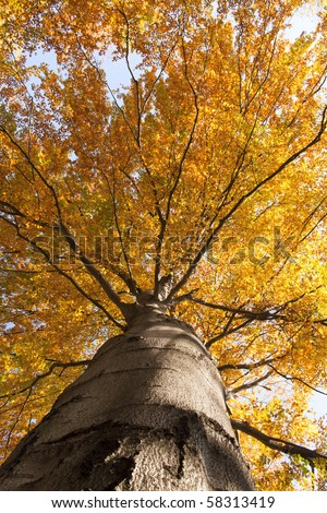 Colorful leaves on a tree in autumn - stock photo