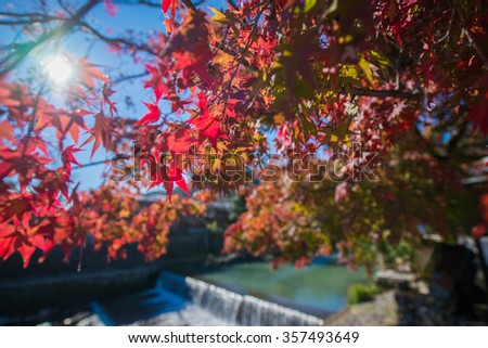 Colorful leaves on maple tree near the river - stock photo