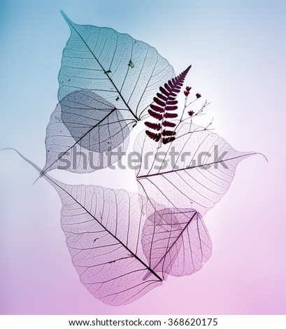 Colorful leaves silhouettes on pastel background - stock photo