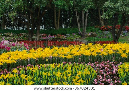 Colorful lilies in the park, spring landscape. - stock photo