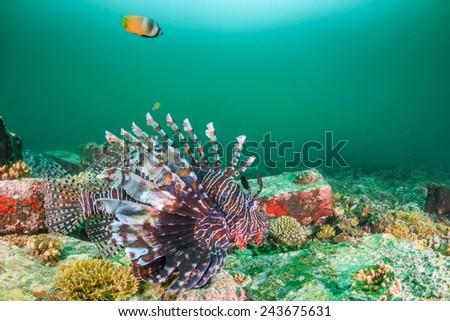 Colorful Lionfish patrols a dark, murky tropical reef - stock photo
