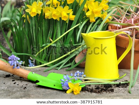 colorful little gardening tools with springtime flowers on wooden plank  - stock photo