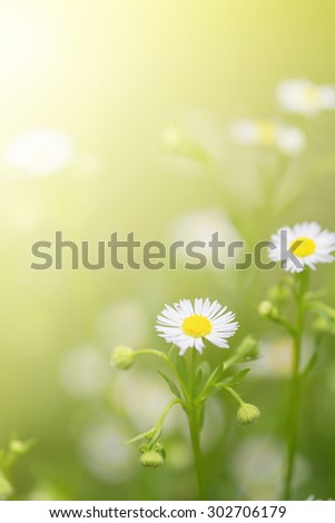 Colorful little white daisy flower and grass for nature agriculture abstract background with sunflare - stock photo