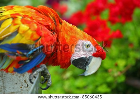 Colorful Macaw