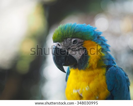 Colorful Macaw Bird