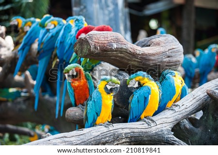 colorful macaw in zoo - stock photo