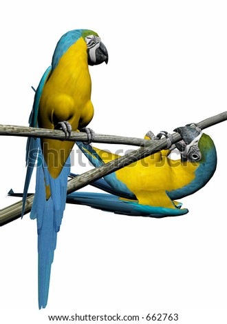 Colorful macaw,parrot couple 3D render, illustration over white. High resolution, detailed image.